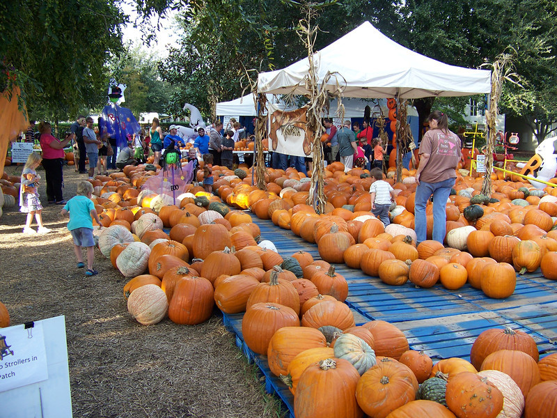 Not far from the town center, we stumbled on a pumpkin patch on the grounds of Celebration's Presbyterian Church.  This was about a week before Halloween.<br /> [Celebration, Florida]