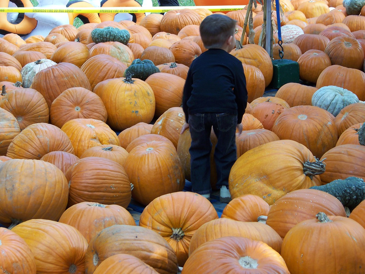 I don't think I've ever seen so many pumpkins in one place before!<br /> [Celebration, Florida]