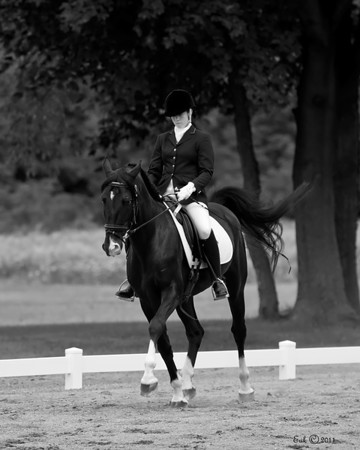 Waltzing Horse Farm Horses