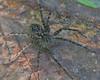 UpACreek - 20120901-0024