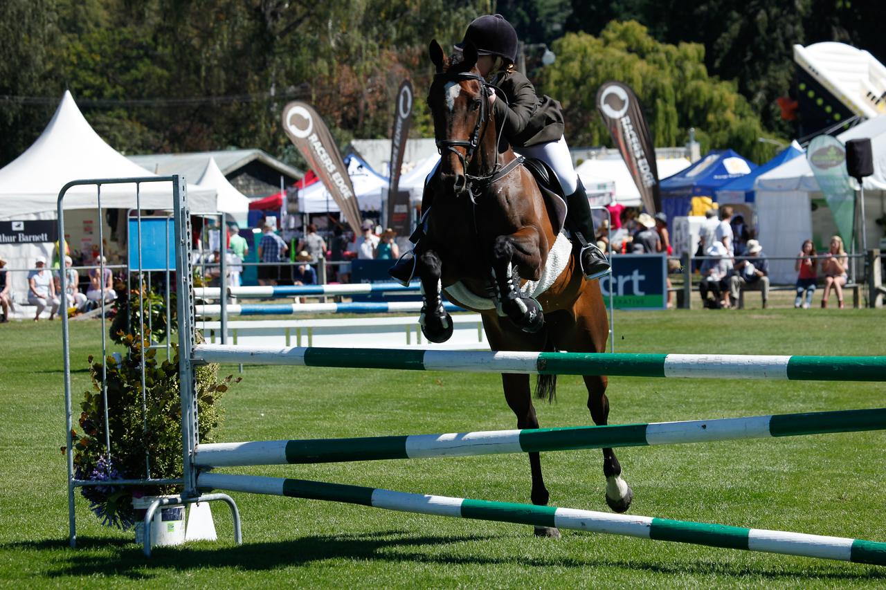 WAP Fri-Horse TA5_8275