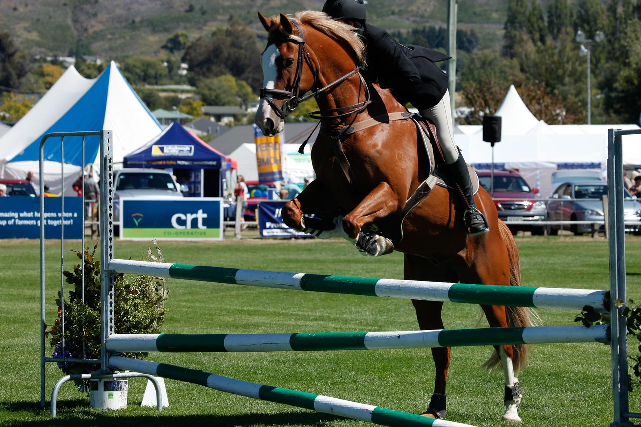 WAP Fri-Horse TA5_8311