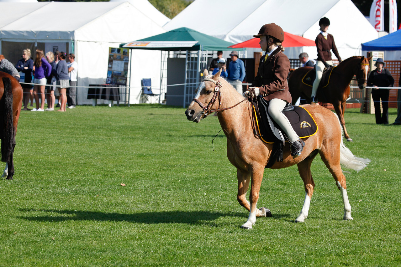 WAP Fri- Pony Club Riders_8010