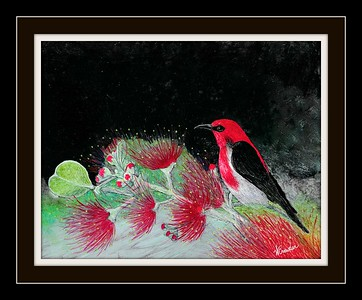 Cardinal Honeyeater