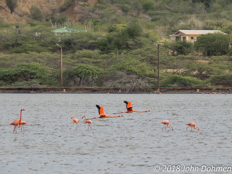 Laag over de andere flamingo's