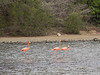 Drie flamingo's net nadat ze de dam overstaken