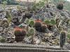 Zuilcactus, schijfcactus en bolcactus allemaal verenigd op de top