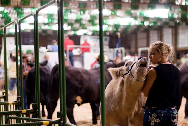 Porter County Fair Steer Auction