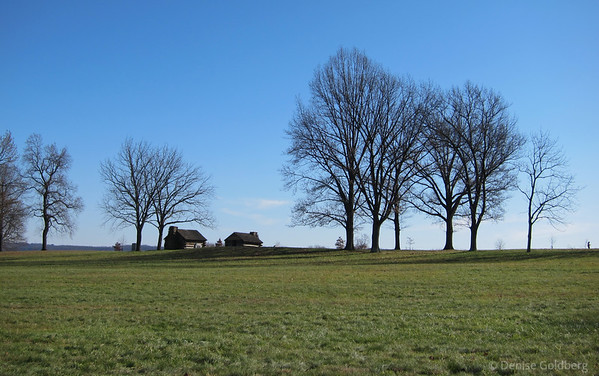 trees, Valley Forge National Historic Park