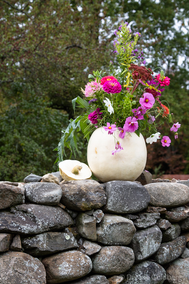 flowers in a squash vase on a stone wall