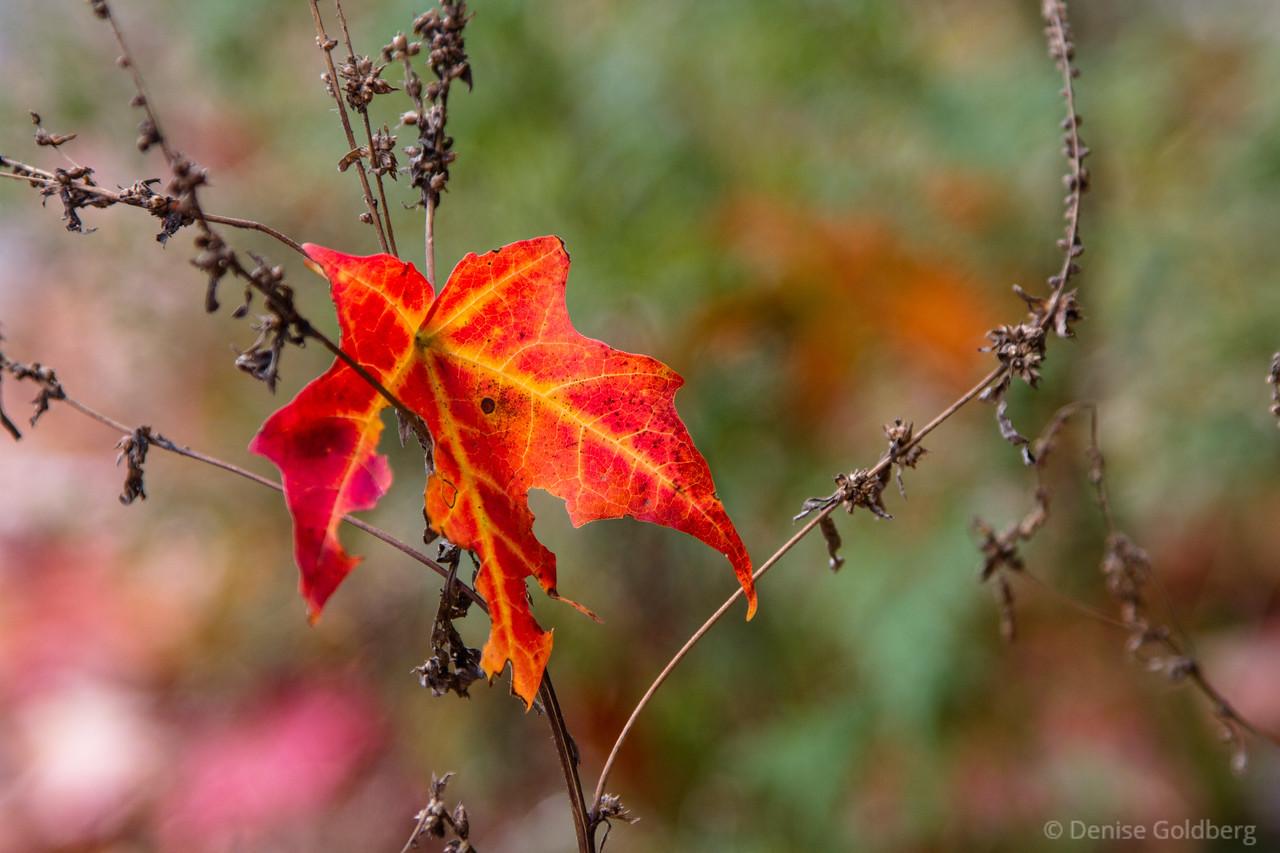 fallen leaf, framed
