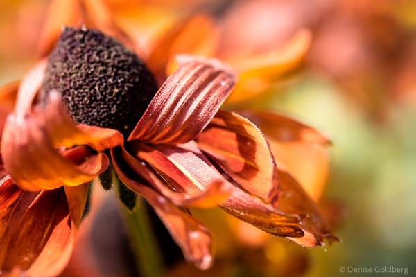 curving petals