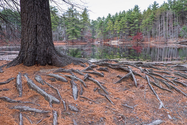 tree roots and reflections