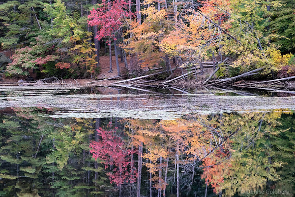 reflections, autumn leaves