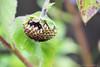 an end-of-season sunflower