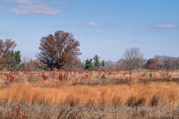 autumn view, in Valley Forge National Historical Park