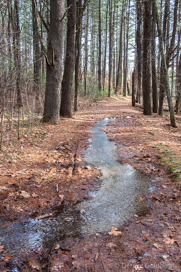 a stream covers a trail, Harold Parker State Forest
