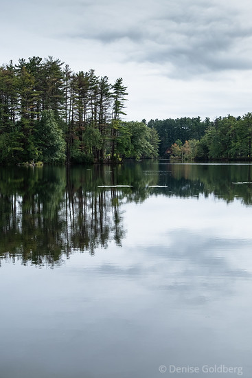mirrored in a pond, at Harold Parker State Forest