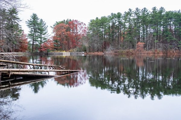 trees reflect, Collins Pond
