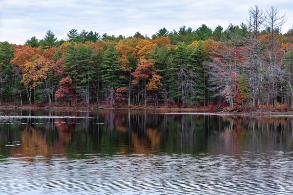 trees, Harold Parker State Forest
