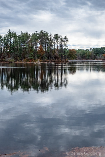 reflections of trees, Harold Parker State Forest