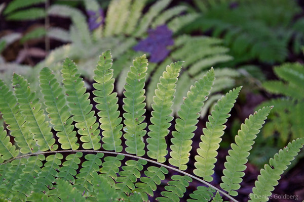 ferns, still wearing green in early October