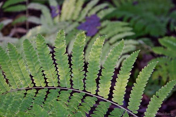 ferns, still wearing green in early October
