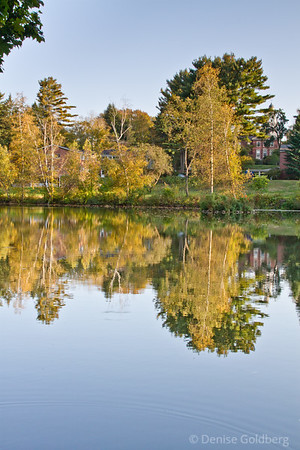reflecting trees in early autumn