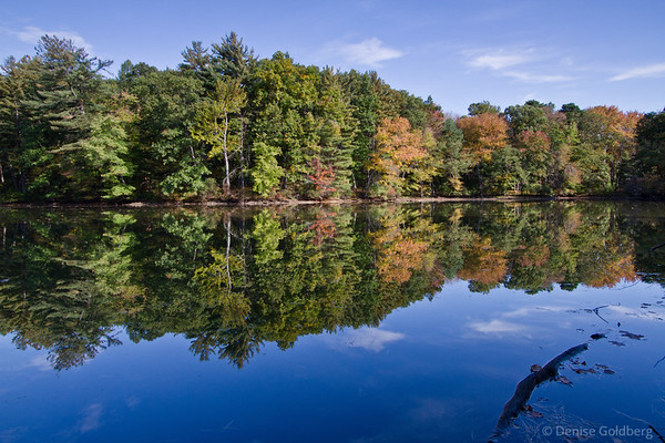 mirrored trees transitioning to autumn colors