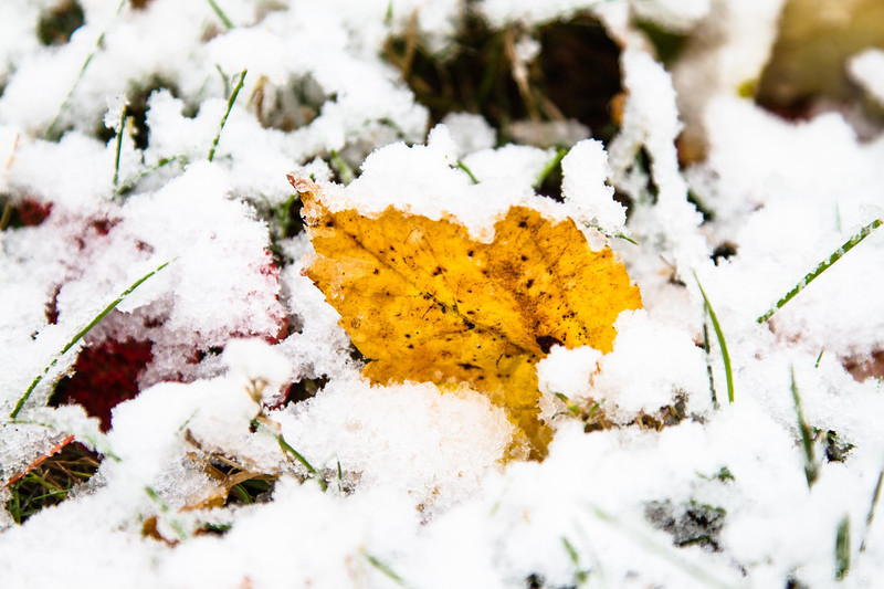 autumn colors accent the white of early season snow