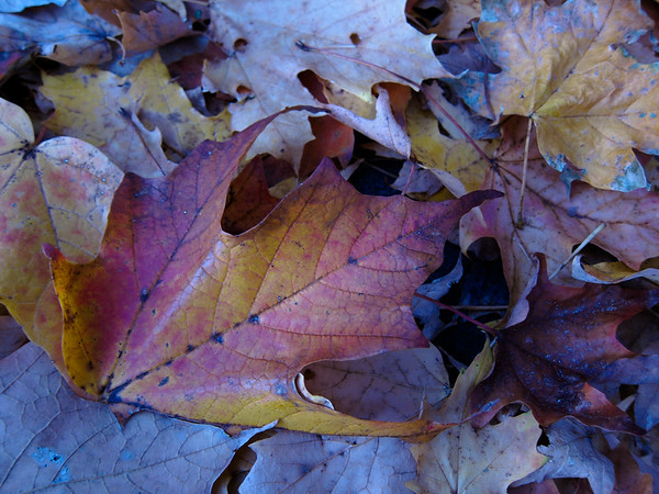 fallen leaves, fading colors