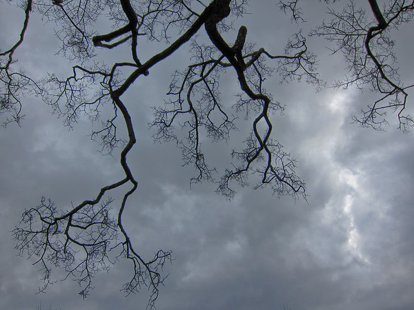bare branches against clouds