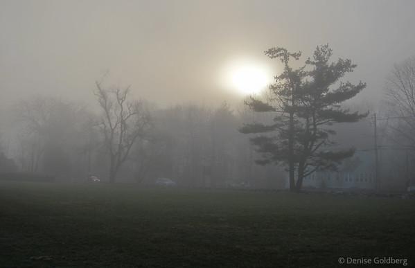 fog shrouding trees