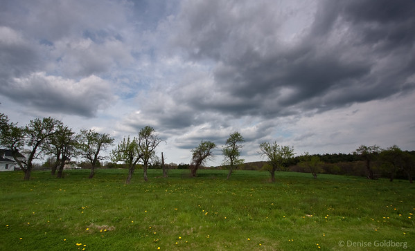 clouds over trees and a green field