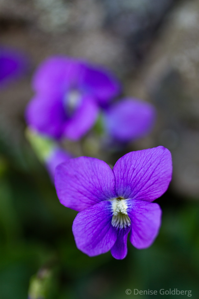 tiny, purple