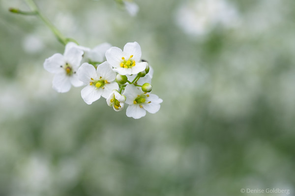 tiny flowers in white