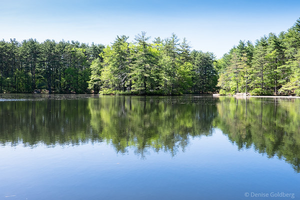 trees and reflection, at Harold Parker State Forest