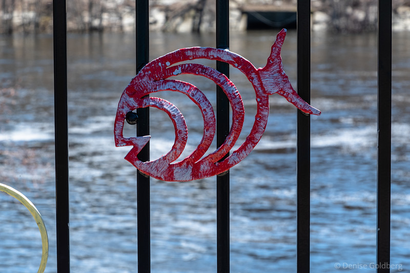fish on a fence