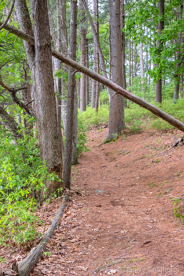 a quiet trail, Harold Parker State Forest