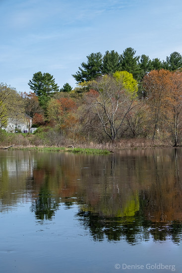 trees reflecting in the Shawsheen River