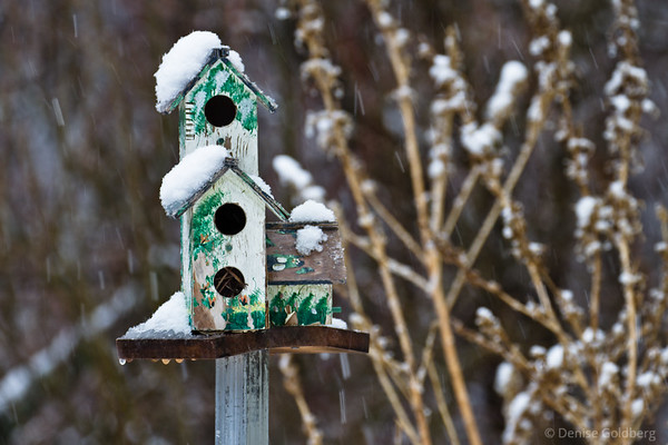 birdhouse, a refuge from snow