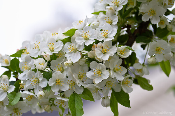 spring, flowers blooming on a tree