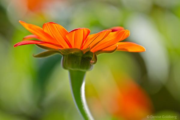 light through petals