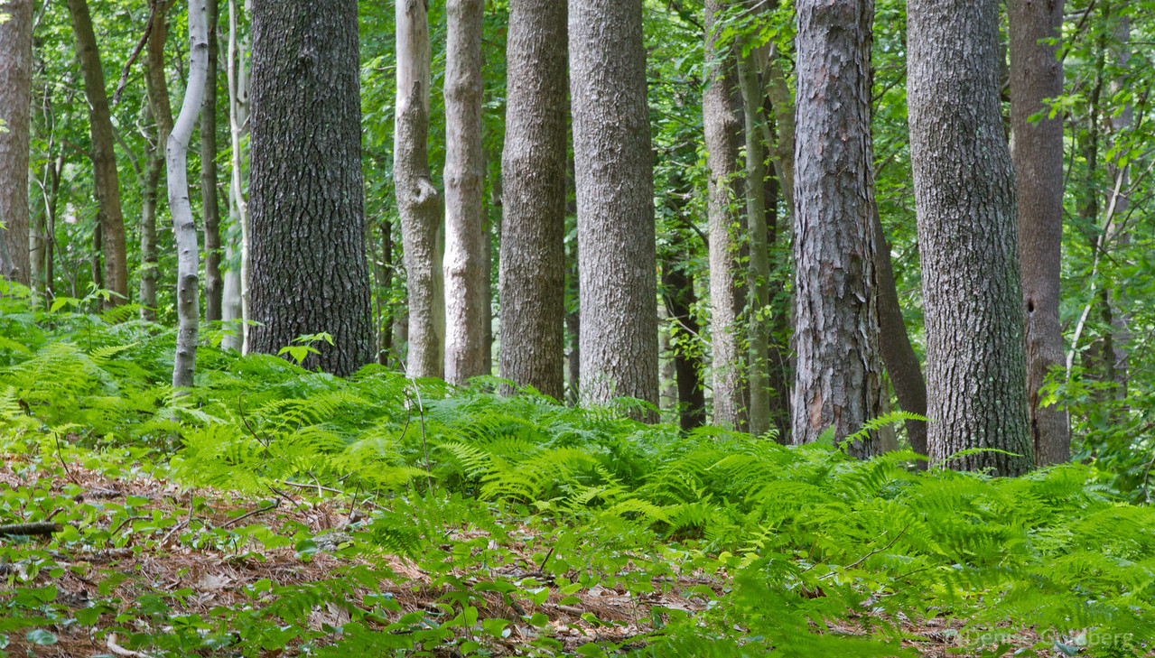bright green ferns highlight tree trunks