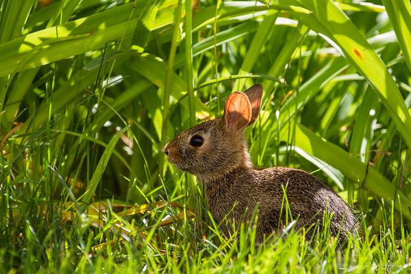 rabbit posing