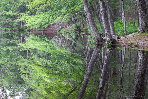 trees and reflections, Harold Parker State Forest