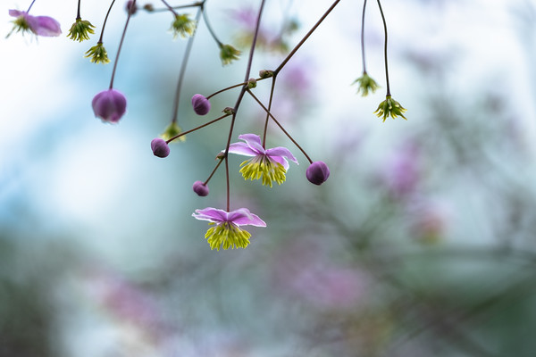 tiny flowers in pink