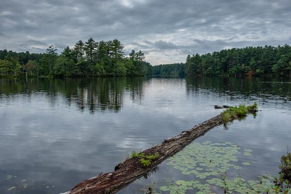 pond in Harold Parker State Forest