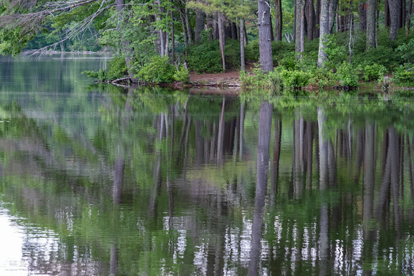 trees reflecting in Field Pond, Harold Parker State Forest