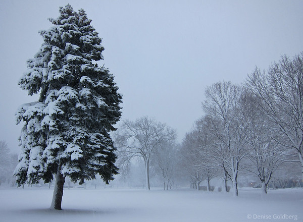 snow falling, clinging to trees